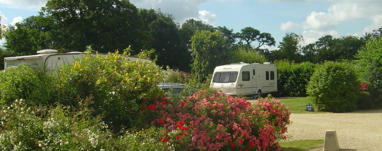 summer-bloom-plough-lane-caravan-site