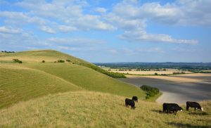 North Wessex Downs Looking Accross Pewsey Vale.